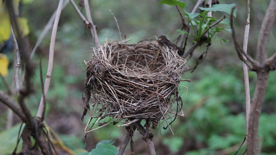 Een leeg nest, kommer en kwel of verademing?
