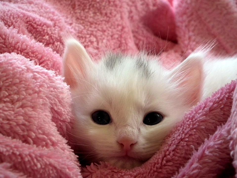 Kwetsbare ouderen die zorgen voor wees-kittens, een prachtig initiatief