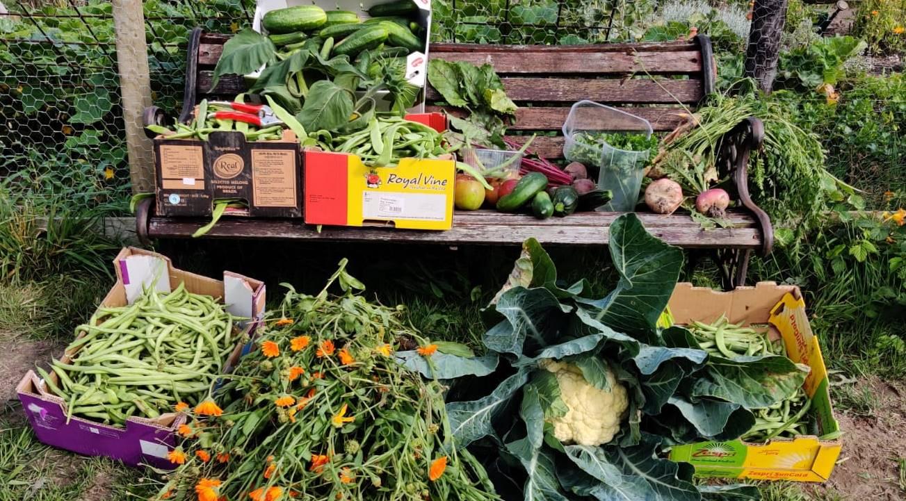 In de moestuin: tijd om te oogsten!