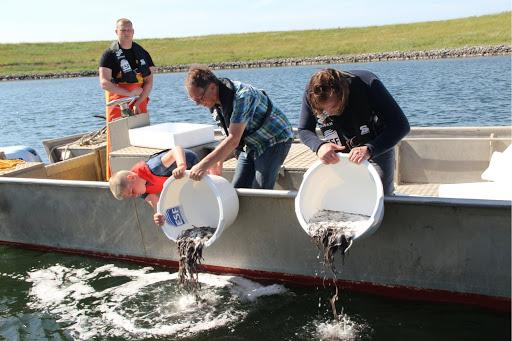 Nederland 580.000 jonge palingen rijker