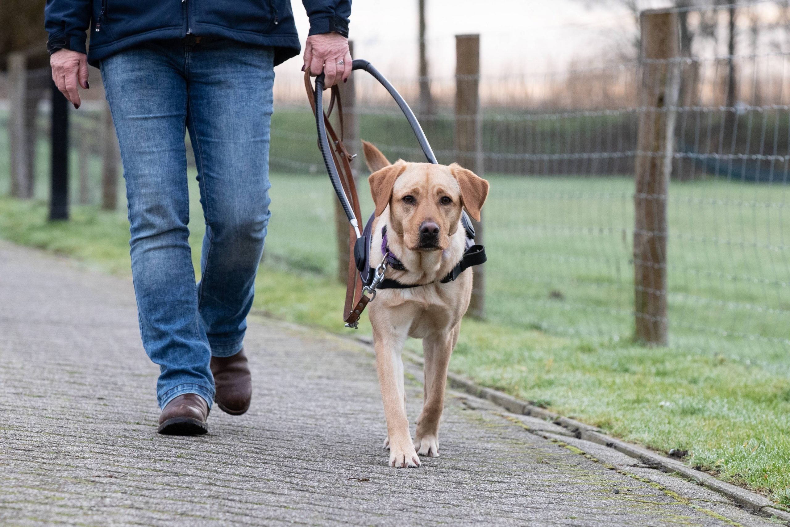 'Mijn hond brengt me veilig naar elke nieuwe plek'