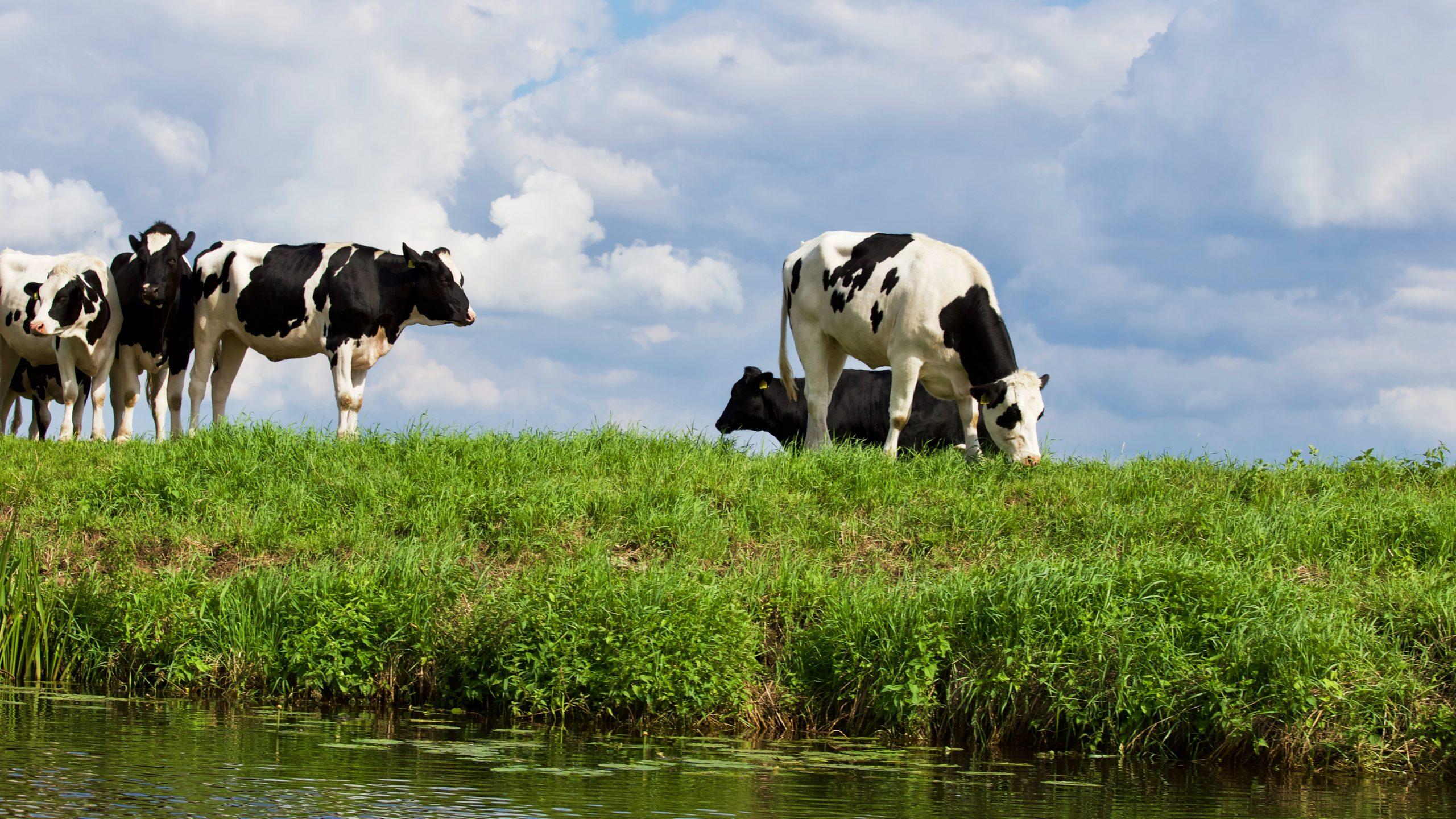 Verhuizen naar het platteland, wie durft?