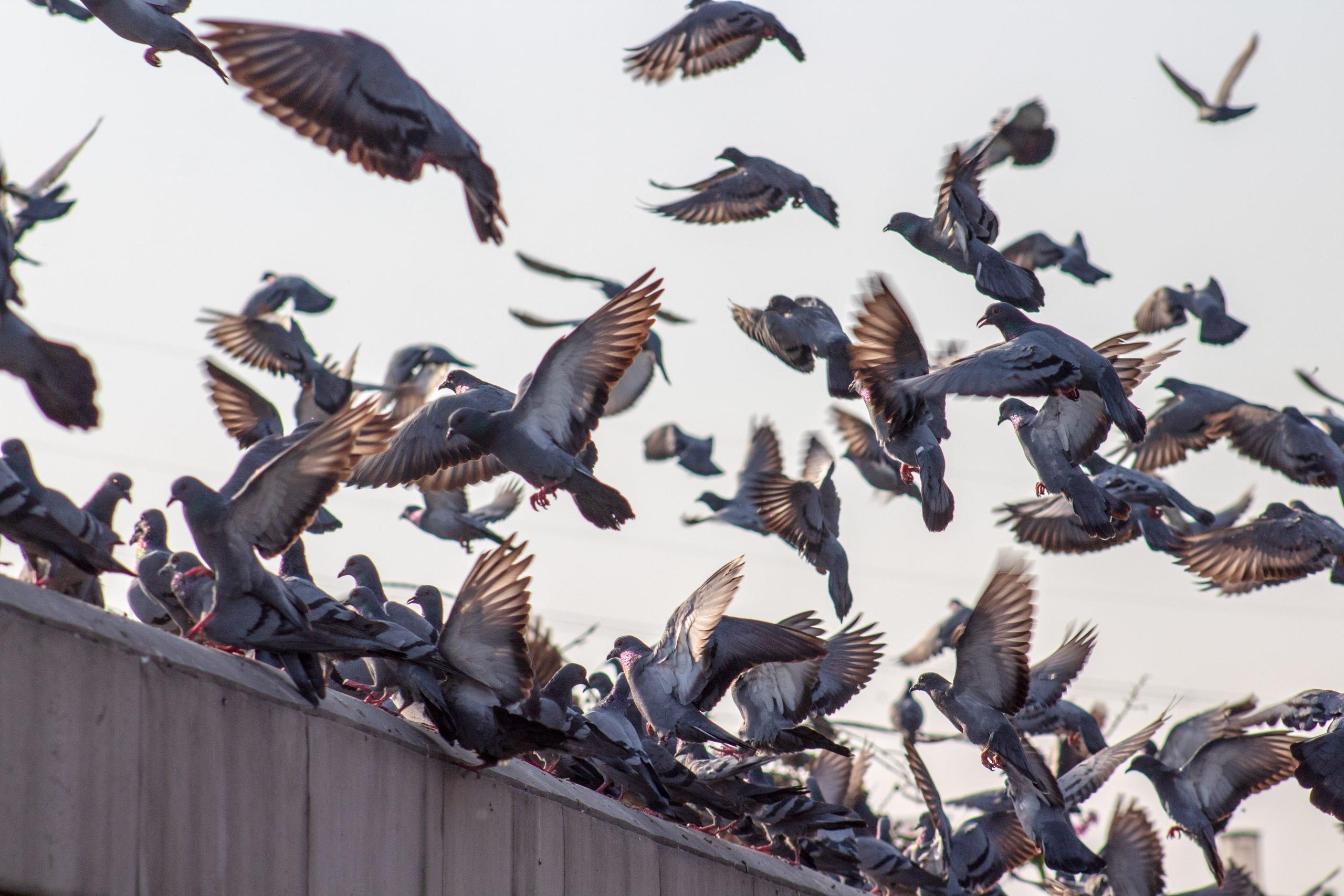 Weetje: welke dieren worden ook wel vliegende ratten genoemd?